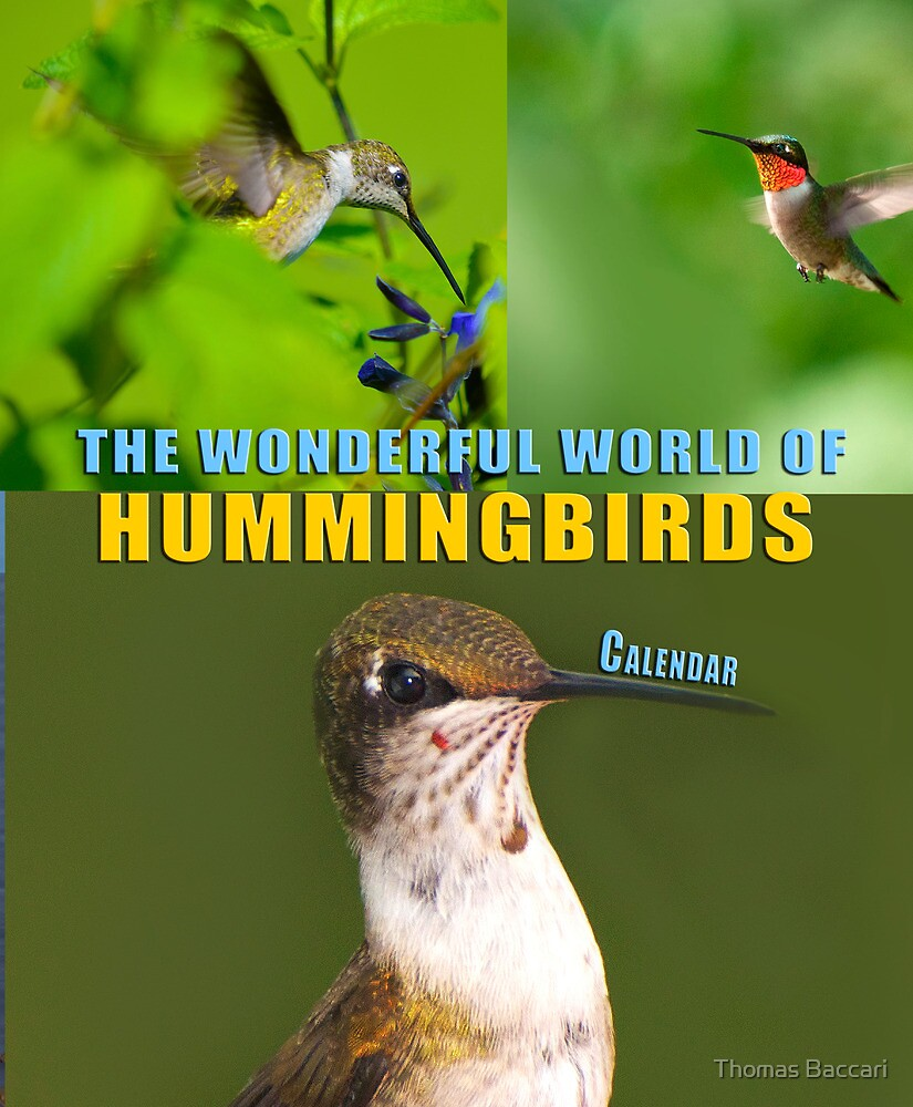 Humming Bird Calendar Cover by TJ Baccari Photography