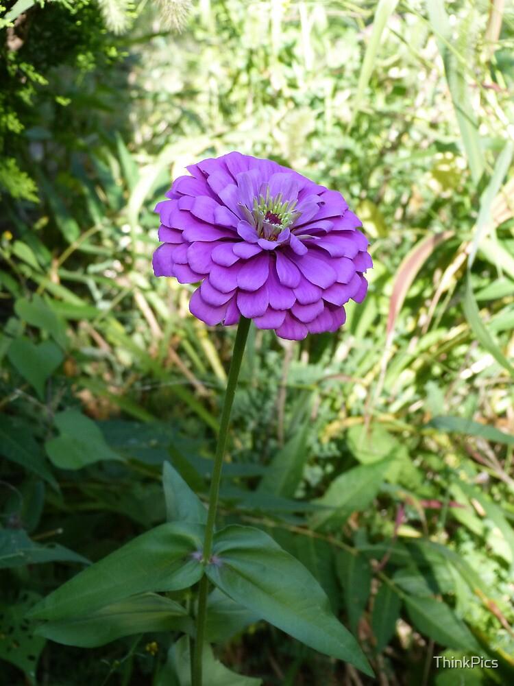 Single Flower by ThinkPics