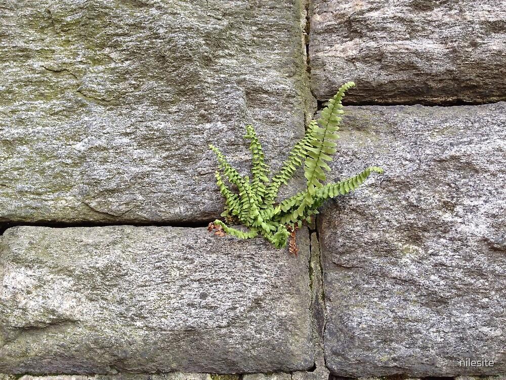Churchyard Wall by nilesite