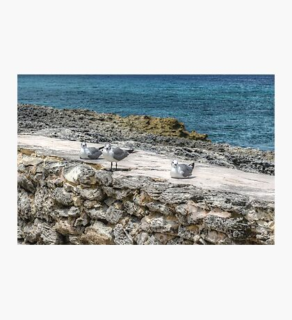 Seagulls in Paradise Island, The Bahamas Photographic Print