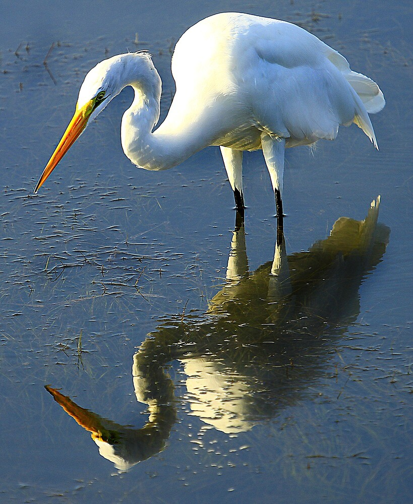 An Egret's Mirror by mhm710