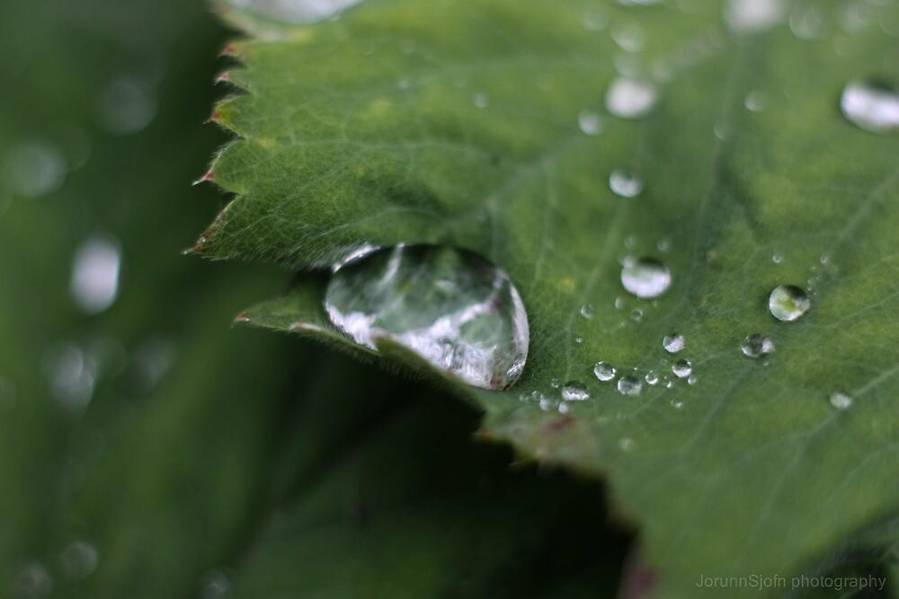 wet leaf by JorunnSjofn Gudlaugsdottir