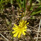 Yellow Wild Flower + Insect by LindyLouMac