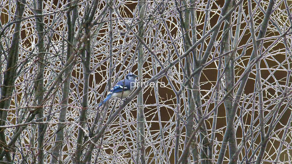 A Spot of Blue by privera