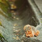 Happy as a Squirrel with a Nut by Christopher Burton