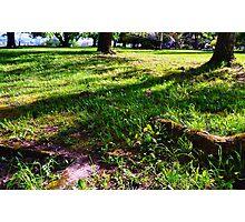 Grassy Photographic Print