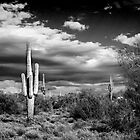 Desert Clouds by gemlenz