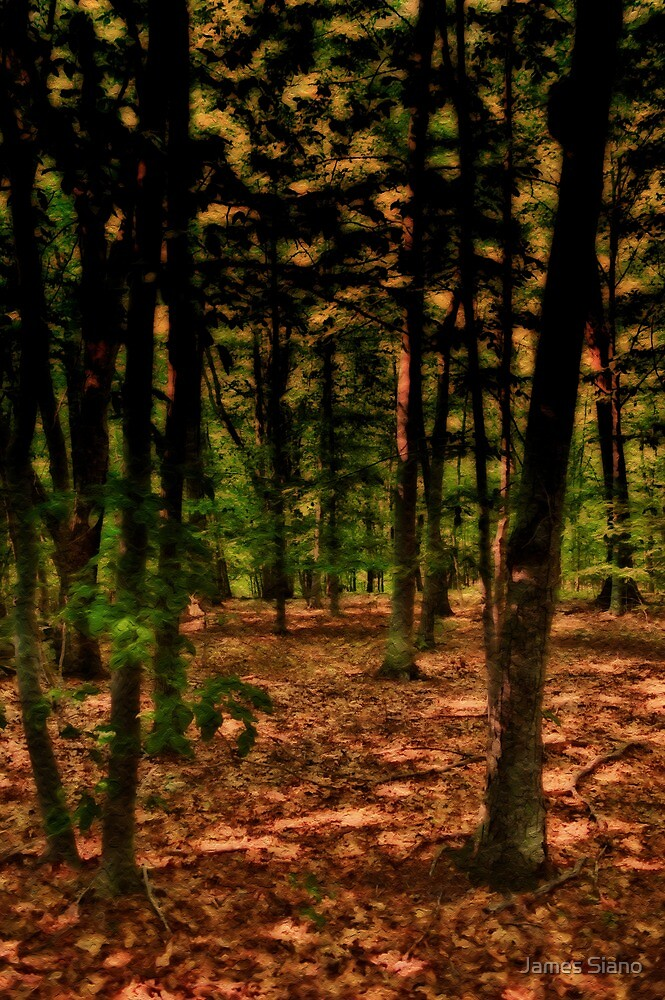 The forest. by James Siano