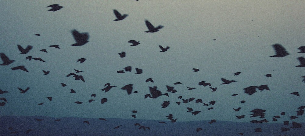 Freedom by Arta Krasniqi