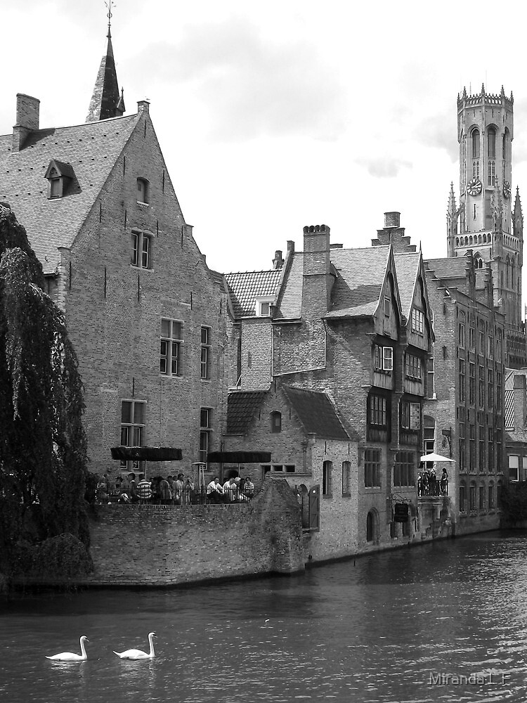 swans from Brugge by Miranda L F