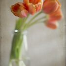 Orange Tulips by Hege Nolan