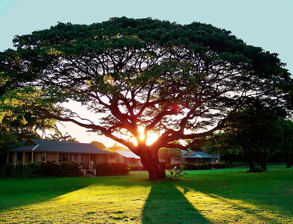 Waimea Tree by fairwood63