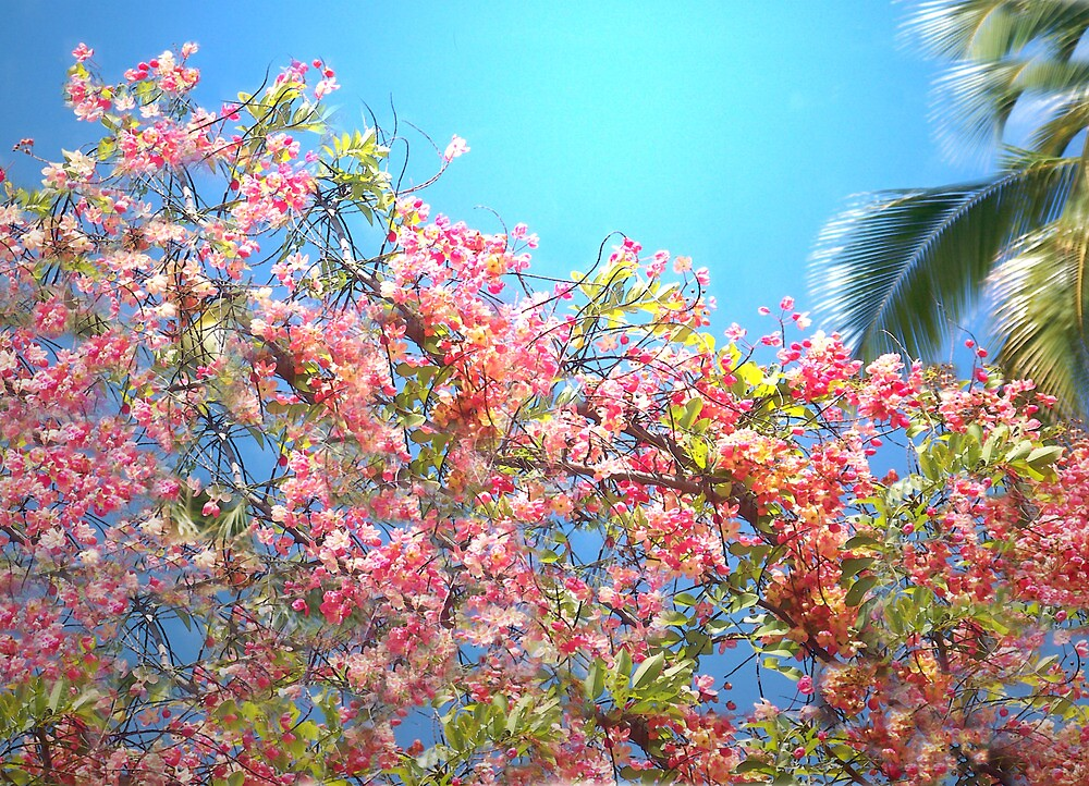 Blossom Sky by fairwood63