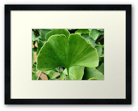 Ginkgo leaf by Enri-Art