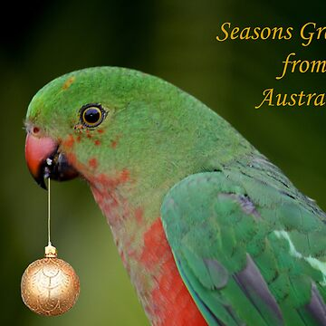 King Parrot Greeting card from Australia by snappypixie