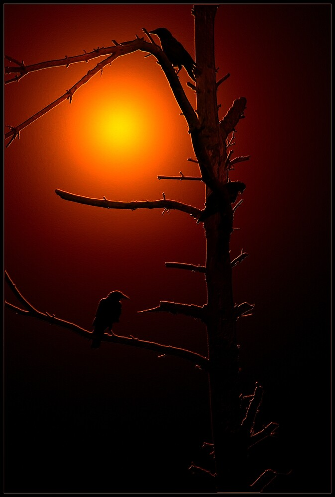 Crows in a Dead Tree at Sundown by Brian104