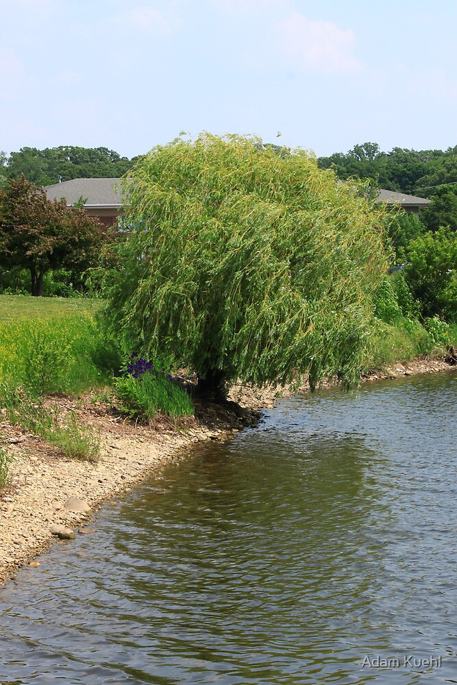 Purple under the Willow by Adam Kuehl