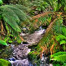 rainforest stream by Bruce  Dickson