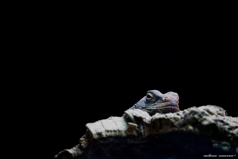 Smiling Lizard! by NSantos