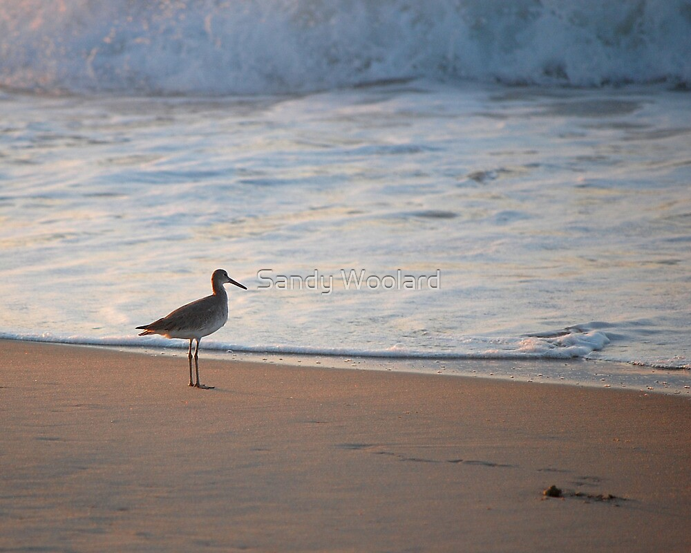 Coastal Relaxation by Sandy Woolard