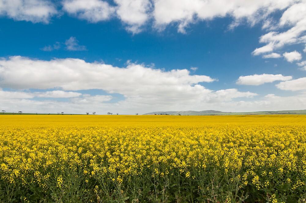 Spring  by Jamie  Druitt