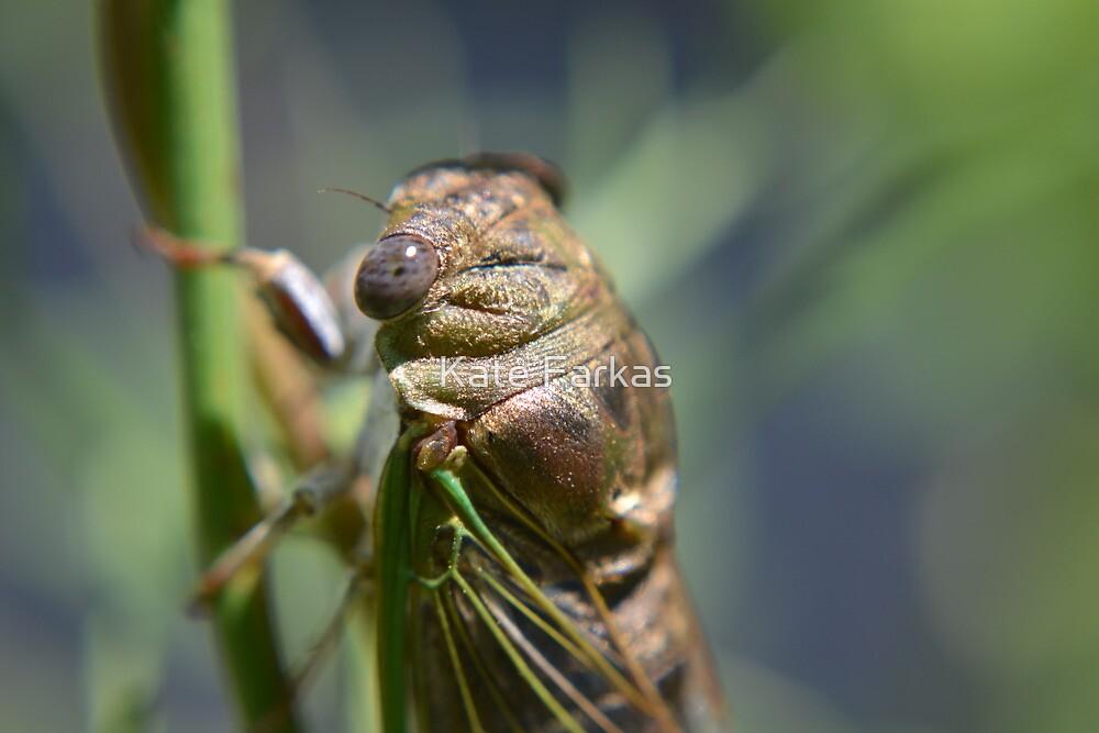 Golden cicada by Kate Farkas