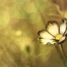 Sweet memories... by Gisele Bedard
