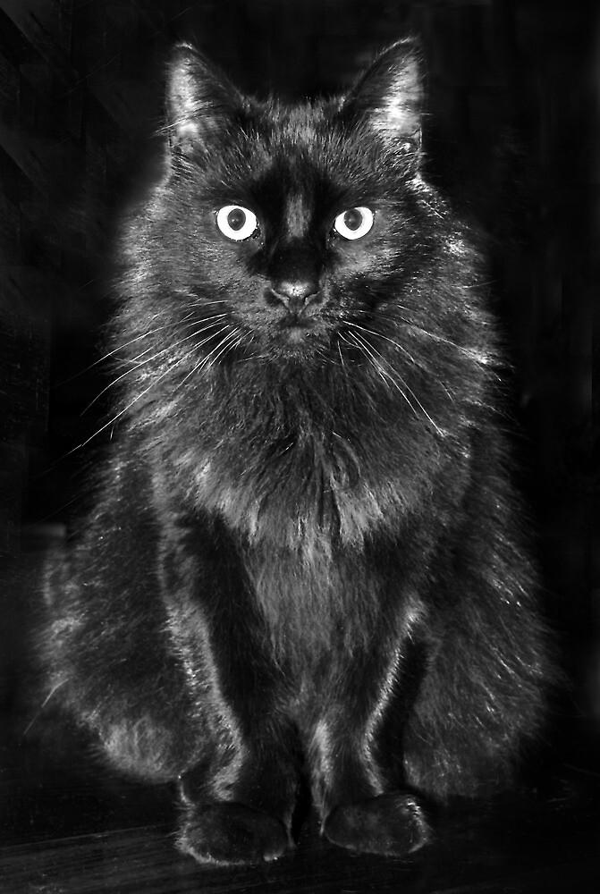 Black Feline by fairwood63
