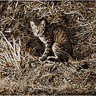 Kawaii Feral Cat on Hillside by fairwood63