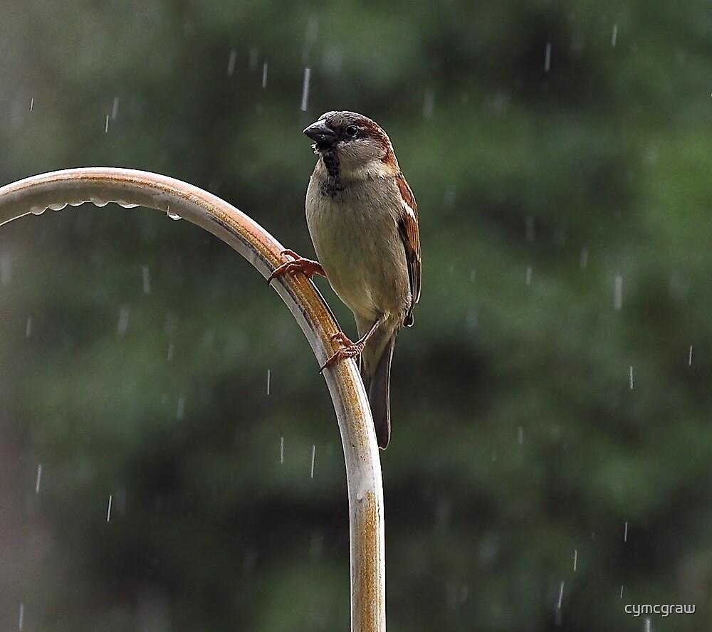 Enjoying The Rain On a Hot Summer Day by cymcgraw