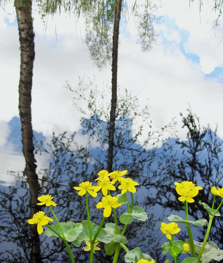 Summery reflection by cheryfayre