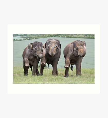 Three Elephants Art Print
