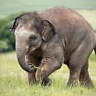 Baby Elephant by Patricia Jacobs DPAGB LRPS BPE4