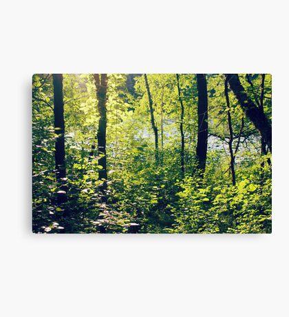 fairy ground Canvas Print
