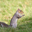 Squirrel by Ellesscee