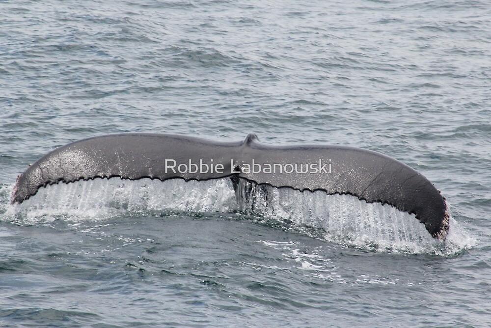 Humpback Tail by Robbie Labanowski