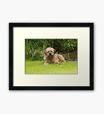 Hairy Border Framed Print