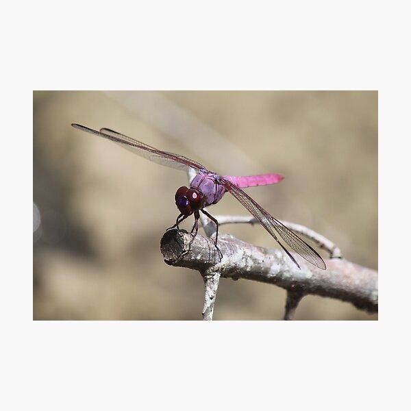 Purple Dragon Photographic Print