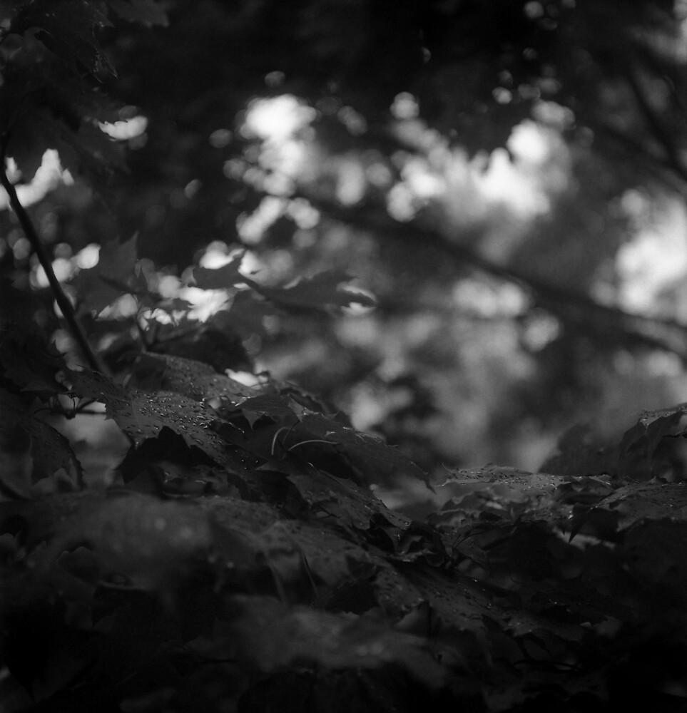 summer by lsmelancholy