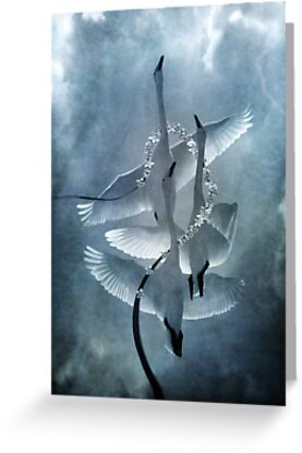 Swan Dance by Diane Johnson-Mosley
