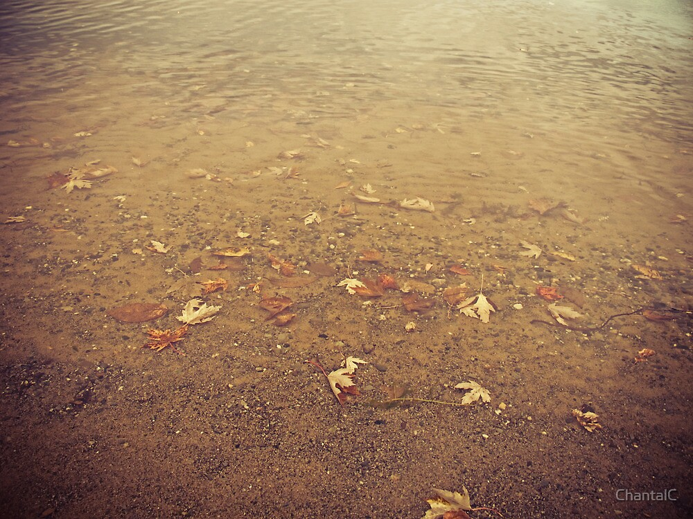 Remnants of Lazy Fall Days by the Lake by Chantal PhotoPix