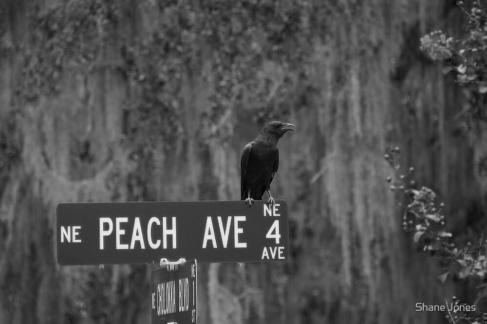 Peach Ave by Shane Jones
