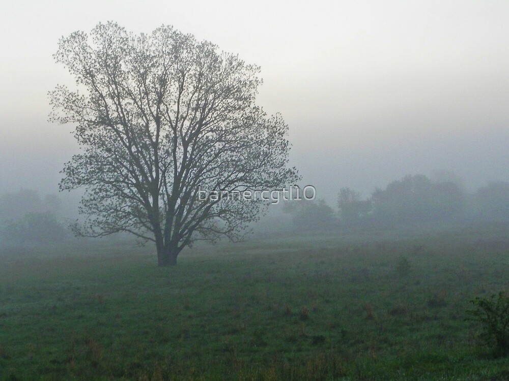 Tree Wrapped in Fog by bannercgtl10