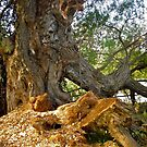 My favourite Tree by Shulie1