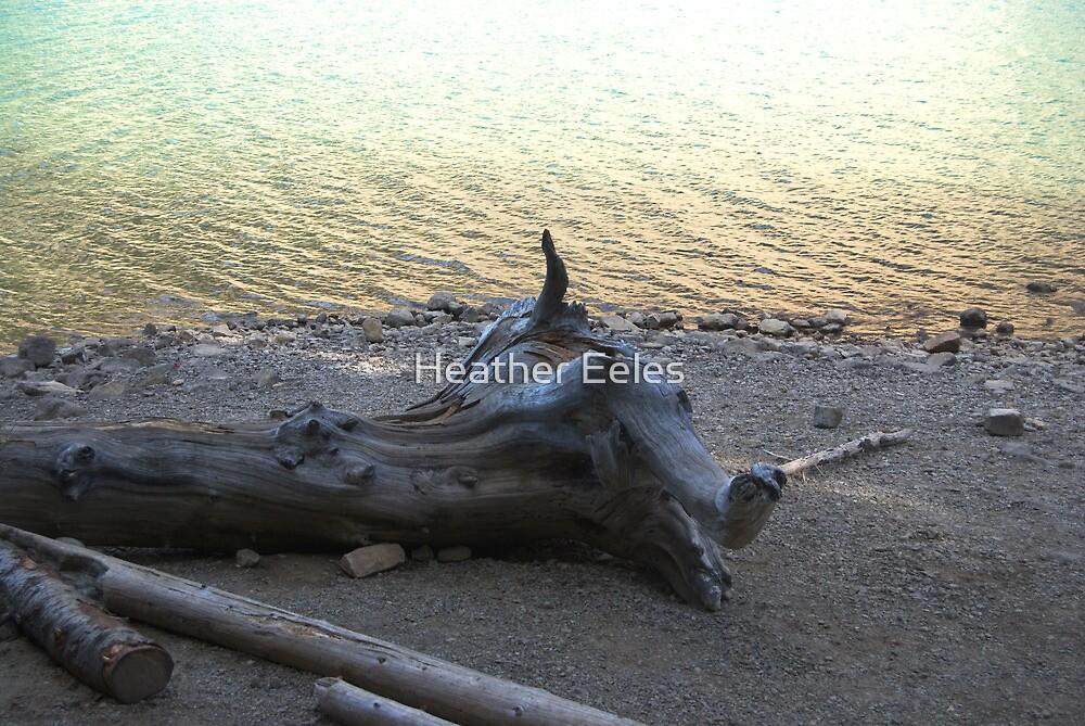 Drift wood - Moraine Lake by Heather Eeles