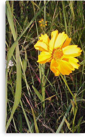 Yellow Wildflower by teresa731