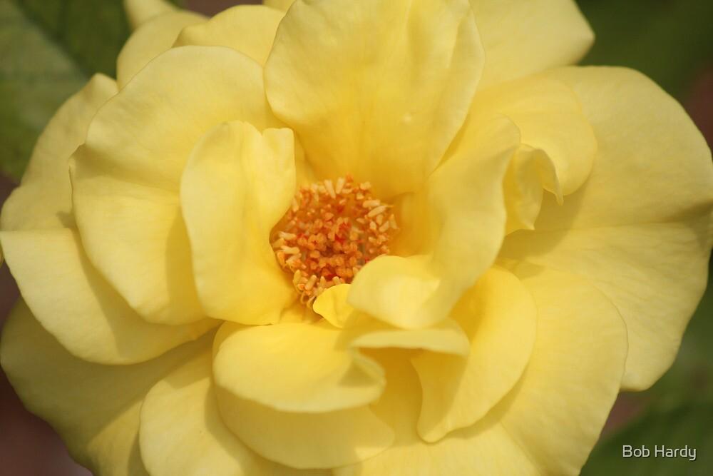 Mellow Yellow by Bob Hardy