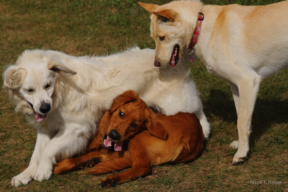 Dog Pile! by Nick Chase