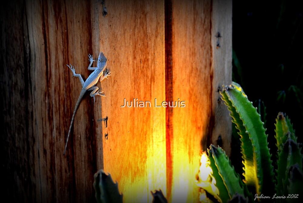 Aruba #2 by Julian Lewis