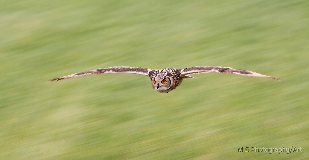 Indian Eagle Owl Inflight by M S Photography/Art